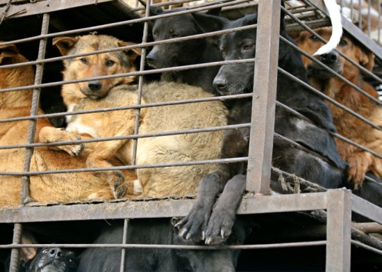 essay on why animals should not be caged