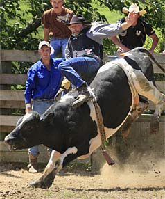 manawatu bull ride