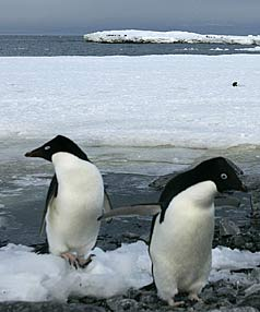 antartica travel penguins