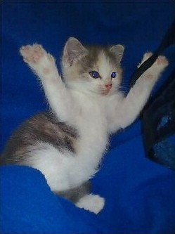 pictures of kittens stretching