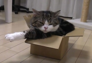 Maru can't quite fit