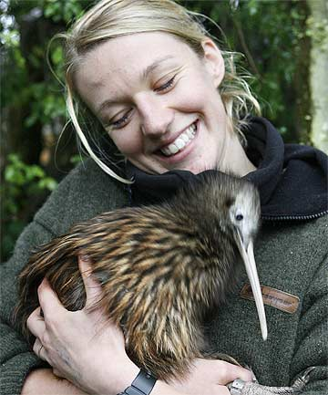 DAD: Matt the kiwi, pictured Willowbank Wildlife Reserve staffer Corry-Ann Langford in 2010.