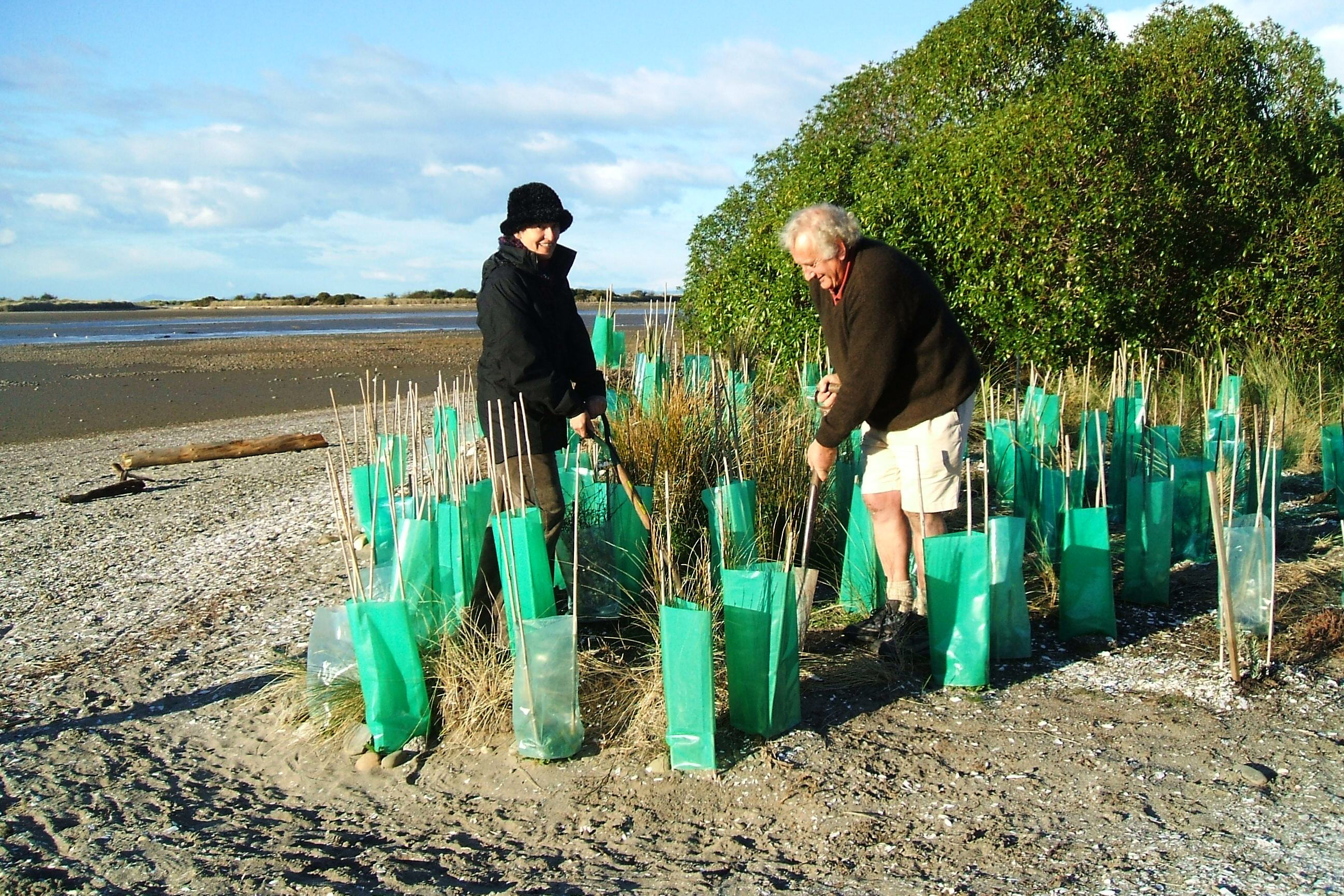 Planting the spit (photo: Forest & Bird)