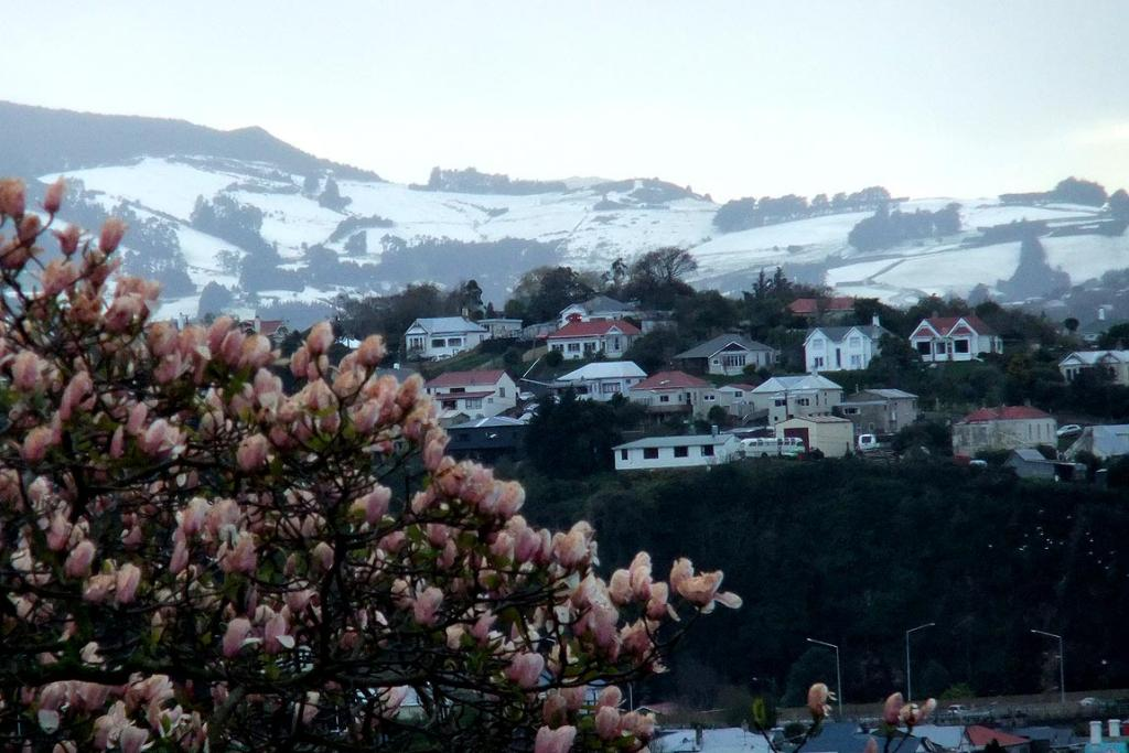 Dunedin wakes up to a coating of snow.