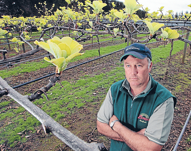 UNHAPPY: Kiwifruit Vine Health Waikato representative Richard Glenn says if growers do not start defending their vines against the Psa-V  their orchards will