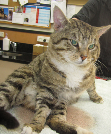 APPEAL FOR WITNESSES: This cat was found strung upside down and bleeding in the loading dock of the New World supermarket in Rototuna.
