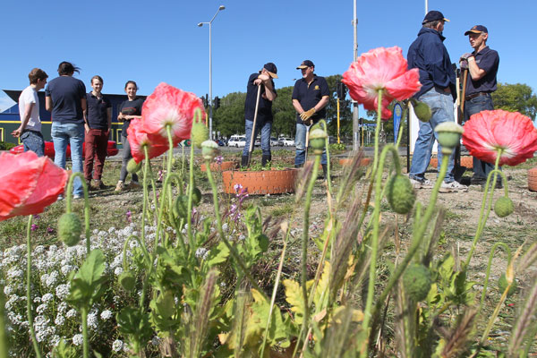 Members of the Student Volunteer Army gave Rotarians a hand planting thousands of flowers across empty sites in the city. This site on the corner of Colombo and Brougham Streets.