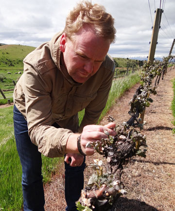 Gibbston Valley and Central Otago viticulturist and consultant Timbo Morrison-Deaker surveys some of the damaged crops in Lowburn yesterday.