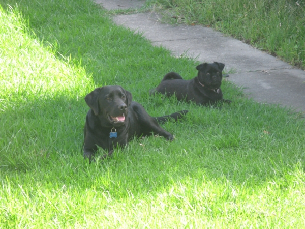 Barney and Ruby