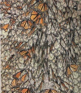 Mexico migrating monarchs