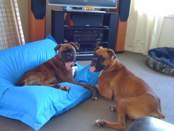 Rosco and Vader