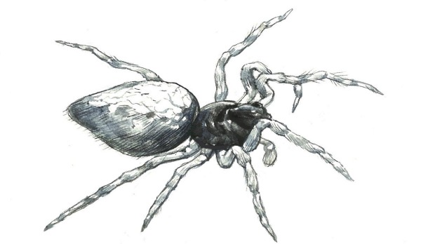 zombie spiders enslaved by manipulative wasp masters