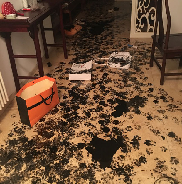 Dog Wrecks Apartment After Being Left Alone For Three
