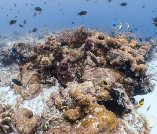 Cruise Ship Devastates Unique Coral Reef