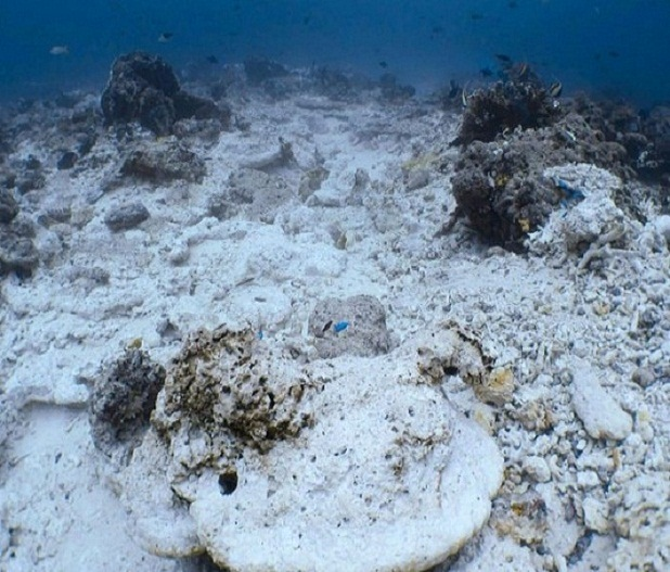 What the coral reef looked like before and after