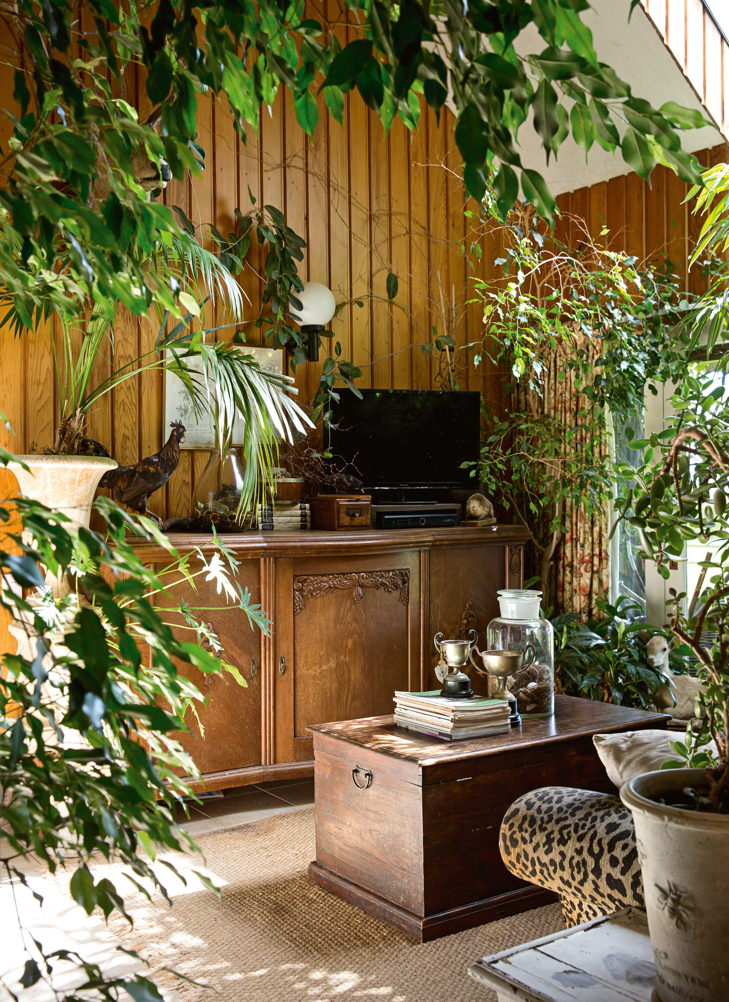 stylist design house plant seeds. The  winter room is filled with vintage taxidermy and house plants CREDIT TESSA CHRISP A stylist s own country Christmas Stuff co nz
