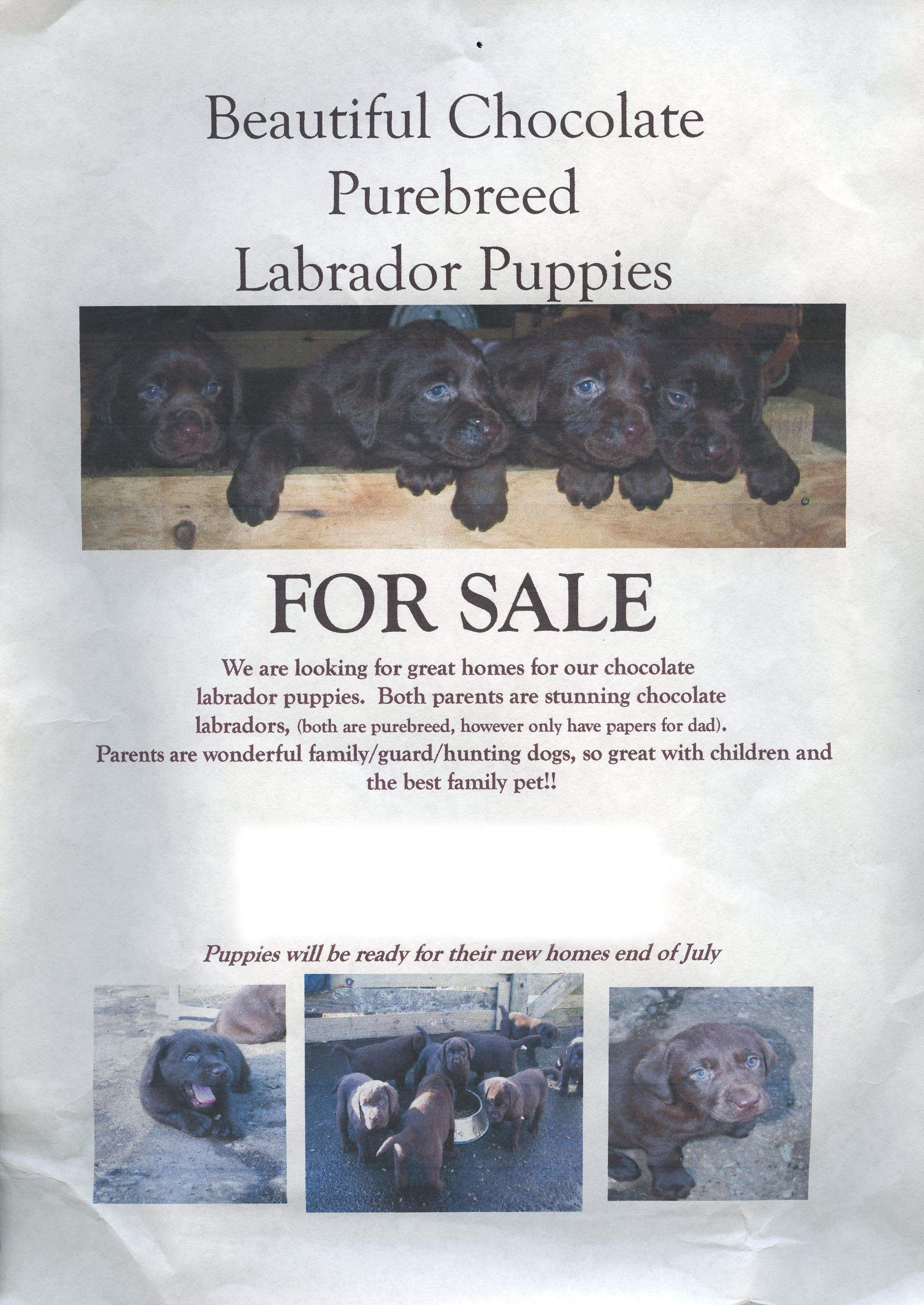 puppy for sale flyer templates puppy link to killing explored
