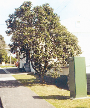 CONTROVERSIAL CUT: Residents are angry this pohutukawa was removed to make way for an unconsented apartment block.