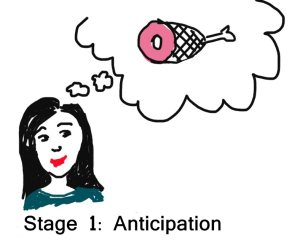 Stage 1 - Anticipation